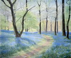 58 - Bluebells at Carstramon Wood I
