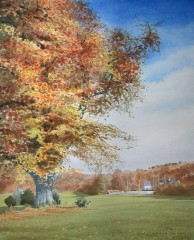 62 - Autumn colours beside Cally 15th fairway